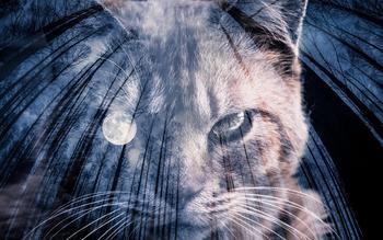 _shared_img_thumb_moon and cat_TP_V.jpg